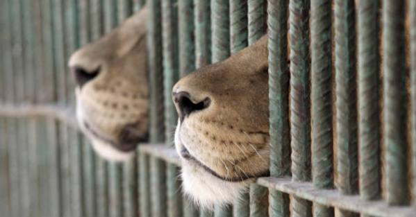 Animales-mueren-por-negligencia-zool-1807392